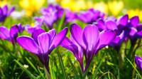 El combate contra la astenia primaveral