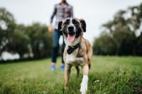 6 percances frecuentes con perros