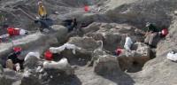 Recuperan el más completo y grande esqueleto de dinosaurio