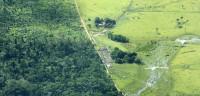 La deforestación del Amazonas crece un 29% en 2013