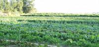 La agricultura orgánica puede alimentar a la Humanidad