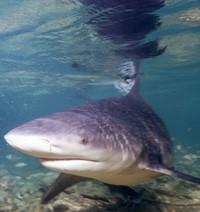 Salvar a los tiburones