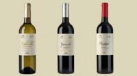 Bodegas Gancedo: Vinos modernos del Bierzo con viticultura clásica