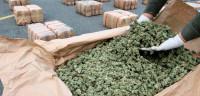 Colombia legalizará la marihuana medicinal la próxima semana