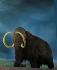Rusia intentará clonar un mamut lanudo
