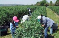Un año más, los trabajadores del campo de Sevilla sufren la discriminación en sus salarios