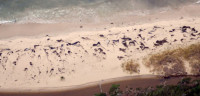Localizan 70 ballenas varadas muertas en las costas de Chile