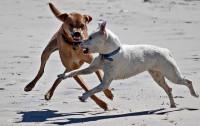3 de cada 4 propietarios de perros peligrosos reconocen desconocer la ley