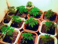 El cannabis vive un nuevo auge favorecido por las tiendas online legales