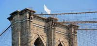 El puente Brooklyn amanece con banderas blancas