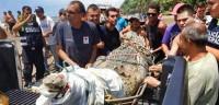 Capturan un cocodrilo de 3,5 metros en las playas de Costa Rica