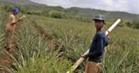 Bolivia sitúa la edad mínima para el trabajo infantil en los 10 años