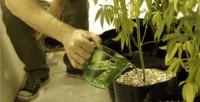 Uruguay abre la inscripción para cultivar marihuana