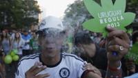 Escasa participación en el registro para cultivar marihuana en Uruguay