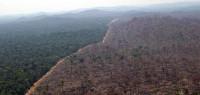 La deforestación del Amazonas cae a niveles de 1988