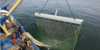 Bloom denuncia buques de arrastre eléctrico en una reserva marina