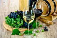 Los mejores vinos: una delicia para el paladar