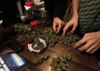 Uruguay, pionero en legalizar la producción de marihuana
