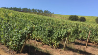 Terras Gauda alcanza la máxima sostenibilidad del viñedo