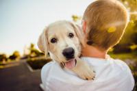 Cuatro de cada diez hogares cuenta con un animal doméstico como el perro