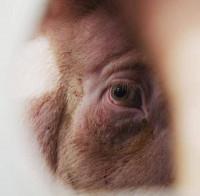 Protestas por todo el país el 24 de agosto contra la esclavitud animal
