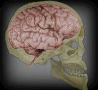 Hábitos para mantener activo nuestro cerebro