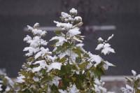 Adelanto del frío invernal