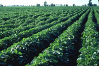 Siete hitos del sector agroalimentario que han marcado 2018