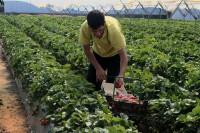 La Seguridad Social pierde 7.104 afiliados extranjeros en julio