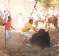 Entra en vigor la prohibición de dar muerte al Toro de la Vega