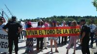 Prohibido por Ley matar al Toro de la Vega con la abstención de Ciudadanos