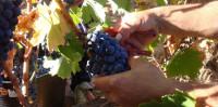 El estrecho margen del vino español
