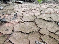 Cuatro de cada cinco muertes o enfermedades atribuibles al cambio climático las sufren niños y niñas