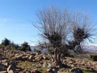 Cómo afecta el fenómeno de la 'España Vaciada' al mercado inmobiliario