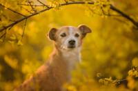 El Colectivo «Yo Animal» presenta enmiendas a la futura Ley de Protección Animal de la Comunidad Valenciana
