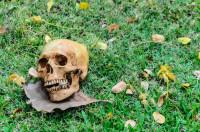 Fallece el último humano inteligente
