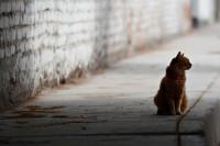 Conoce los derechos de los gatos para hacerlos valer con rapidez