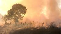 Arzobispos brasileños denuncian incendios amazónicos