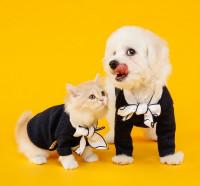 Perros vs gatos, ¿qué mascota es más costosa de mantener?