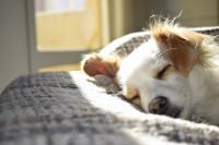 Tres de cada cuatro españoles afirman que convivir con una mascota les está ayudando a sobrellevar el confimaniento