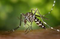 Las picaduras de los mosquitos, una de las principales preocupaciones de los pacientes en verano