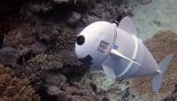 El MIT crea 'SoFi', un pez robótico para documentar la vida marina