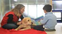 Terapia asistida con perros: salud a cuatro patas