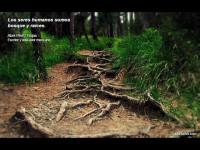 Somos bosque y raíces