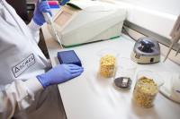 Un nuevo test permite detectar los transgénicos en nuestros alimentos