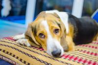 ¿Cuál es el destino de una mascota si fallece su dueño?