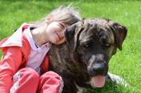 Así son los perros idóneos para regalar a los niños: estables, perspicaces y dóciles