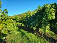 La Rioja, un viaje espectacular a la tierra del vino