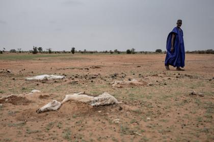 La tercera sequía en seis años deja sin alimentos a 245.000 personas en Senegal