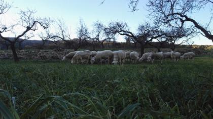 Un pastor emprendedor busca producir queso ecológico con energía verde